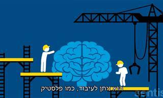 הסבר על הפלסטיות והגמישות של המוח שלנו