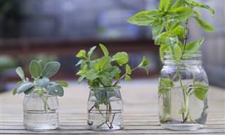 4 דרכים לשמירת טריותם של עשבי תיבול למשך זמן