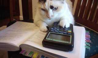 חיות רוכשות השכלה - מצחיק!