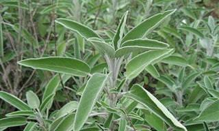 12 צמחים שימושיים שכדאי לכם לגדל בבית, במיוחד את מספר 5!