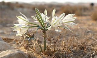 14 פרחים שניתן למצוא אך ורק בישראל