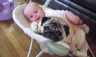 ילדים וכלבים נפגשים בפעם הראשונה