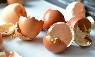 15 שימושים מפתיעים בקליפות ביצים לגוף וברחבי הבית