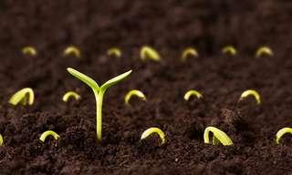 על זרעים וכנות - סיפור קצר על הסוד להצלחה