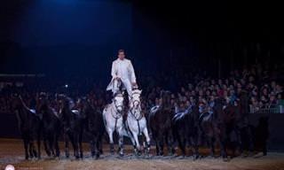 הלוחש לסוסים: מופע הרכיבה הזה לא דומה לשום דבר שראיתם בעבר