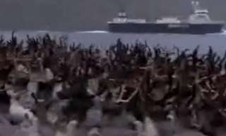 עדר של איילי צפון חוצה מעבר מים