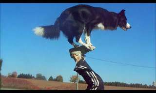 זו כנראה הכלבה הממושמעת ביותר בעולם