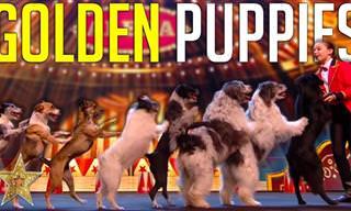 מופע כישרונות של ילדה מדהימה וחבורת כלבים חמודה במיוחד!
