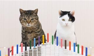 מופע דומינו ראלי מרהיב שמפעילים לא פחות מחתולים