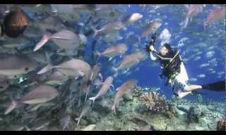 צלילה בעולם הימי מהעשירים בתבל