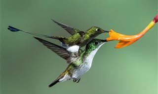 התמונות הזוכות בתחרות צילומי הציפורים של אודובון