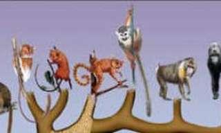 האם המשותפת לכל בני האדם חיה לפני 200 אלף שנה