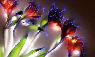 תמונות מחשמלות של פרחים מחושמלים