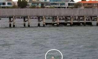 גבר צעיר מציל כלב מטביעה - מרגש!