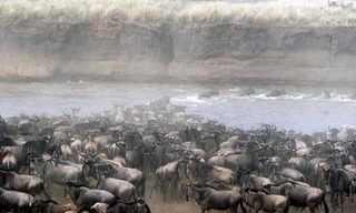 ההגירה הגדולה של עולם הטבע - מדהים!