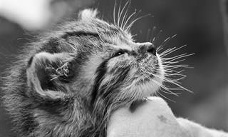 12 היתרונות הבריאותיים מהם נהנים אנשים שמגדלים חתול בביתם
