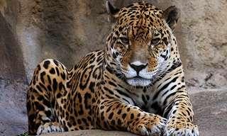 19 החיות הקטלניות ביותר