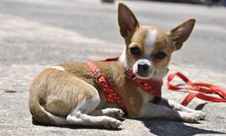 כלב התקיפה והבעל העצבני - בדיחה שתלמד אתכם לחשוב לפני שאתם צועקים!