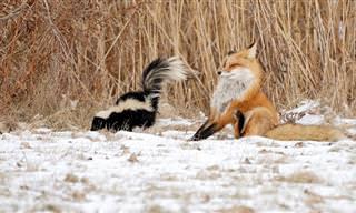 16 תמונות מצחיקות של חיות חמודות בחורף