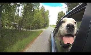 בחור ש``יוצא לטיול`` עם הכלבים שלו - ברכב!