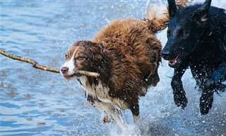 כך תשמרו על חיי הכלב שלכם בים ובבריכה