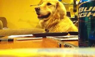 כלב עם חוש קצב - חמוד!