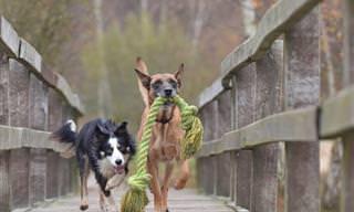 12 הסימנים לכך שהכלבים שלכם חכמים במיוחד