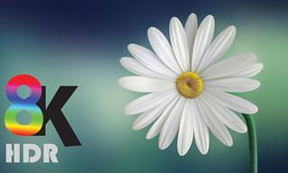 סרטון מרהיב של פרחים נפתחים בהילוך מהיר