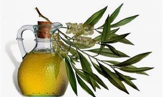 16 שימושים יעילים בשמן עץ התה שתשמחו להכיר