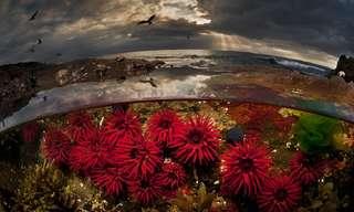עולמות מקבילים: 15 תמונות מקו המים