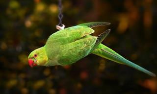 14 ציפורים יפהפיות שנמצאות בארץ באביב