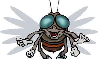 מחצו את הזבובים - משחק