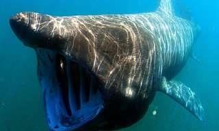 12 זני כרישים מיוחדים במינם
