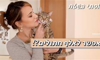 אפשר לאלף חתולים? כן! בעזרת הסרטון הזה תגלו מה צריך לעשות...