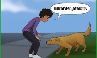 10 טיפים להתחברות נכונה וחברותית עם כלבים זרים