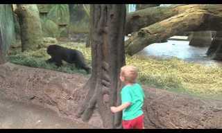 משחק מקסים בין ילד לקופיף גורילה קטן