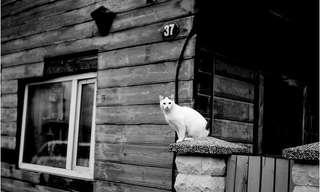 יום בחיי טרטו - תמונות נפלאות מאסטוניה!