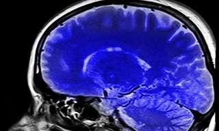 באיזה אחוז של המוח אנו משתמשים?