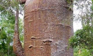 הסיפור מאחורי העצים המפורסמים בעולם!