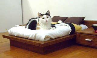 19 עיצובים מיוחדים לרהיטים של חתולים