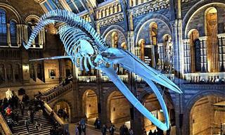 מוזיאונים מומלצים בלונדון שכל אחד ייהנה מהם