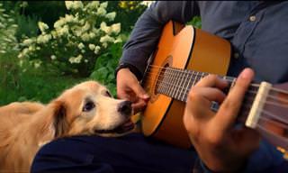 המוזיקאי הזה היה מנגן לכלבתו שירים יפים - והקדיש לה מחווה יפה כשהלכה לעולמה
