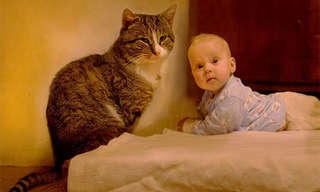 עוללים, פעוטות וחתולים - שילוב מנצח