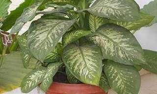 זהירות - צמח שיש בכל בית עלול להיות רעיל לילדים!!