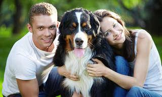 כיצד חיות מחמד משפיעות על מערכות יחסים?