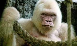 בעלי חיים בעלי צבעים מיוחדים
