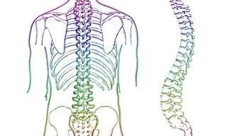 ההשפעה של החוליות השונות שבעמוד השדרה
