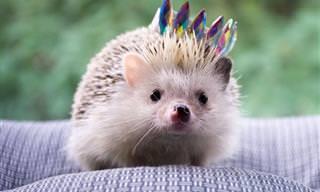 16 תמונות של חיות ברגעים מצחיקים ומשעשעים