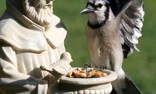 פסלי ובעלי חיים - תמונות מצחיקות!