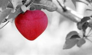 תּוֹרַת הַשִּׁדּוּךְ - סיפורי אהבה תנכיים בחרוזים